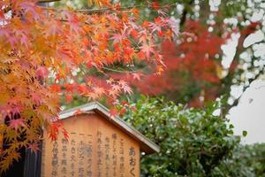 rote japanische Ahornblätter rahmen ein hölzernes Kanji-Zeichen ein
