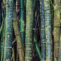 Bambus-Graffiti foto