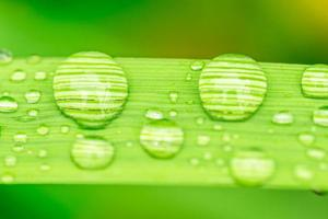 Makro-Nahaufnahme von Wassertropfen auf einem Blatt foto