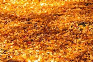 japanischer Herbstgarten mit Ahorn