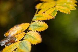 Herbst gelb foto