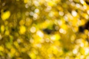 Herbst Bokeh. foto