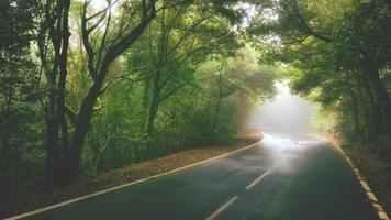 Herbst Weg