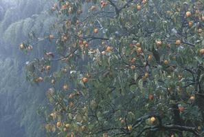 Herbstregen foto