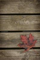 Herbstblatt foto