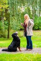 Mädchen im Herbstpark trainiert ihren Hund im Gehorsam
