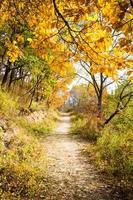 Herbstweg foto