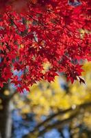 Herbstruhm foto