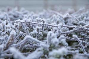 Raureif-Nahaufnahme der Weißdornhecke foto