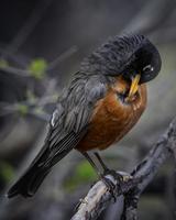 Vogel thront auf Baum