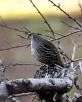 grauer und weißer Vogel auf Baum