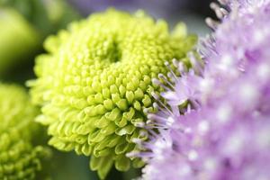 grüne Blätter blühen noch in voller Blüte Makro foto