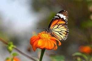 Schmetterling im Garten 7