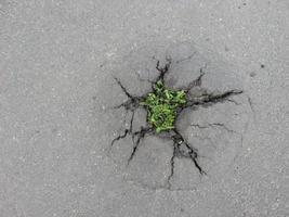 Unkraut wächst durch Risse in der Fahrbahn foto