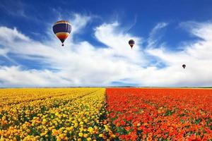 Drei Luftballons fliegen über das Feld
