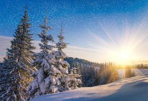 Blick auf schneebedeckte Nadelbäume und Schneeflocken bei Sonnenaufgang.