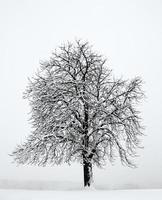 alleiniger Baum in der schneewinterlichen Landschaft