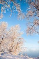Bäume mit Raureif bedeckt