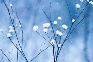 blauer Schneefall