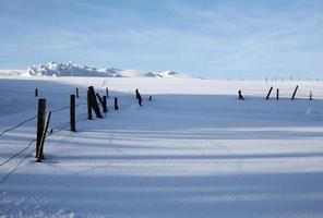 schneebedeckte Landschaft foto