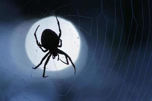 Spinnennetz mit Tautropfen Nahaufnahme