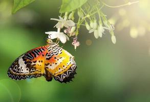 Schmetterling im Garten mit Sonnenlicht foto