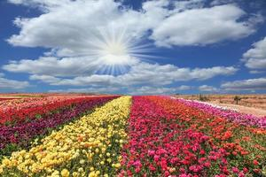 der blühende Garten foto