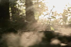 Sonnenstrahlen kommen durch Bäume und Pflanzen foto