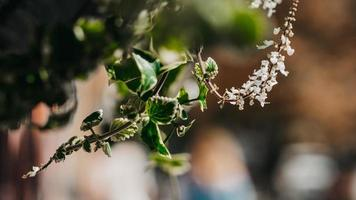 selektives Fokusfoto von Blüten mit weißen Blütenblättern foto