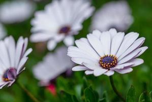 weiße Blume, geringe Schärfentiefe Nahaufnahme