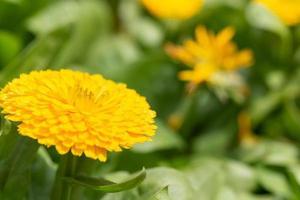 bunte gelbe Blume Nahaufnahme