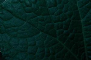 grüne Blätter, dunkler Hintergrund