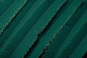 grüne Blätter, dunkler Hintergrund foto