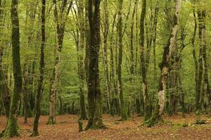 Landschaftsszene von Moos auf Bäumen foto