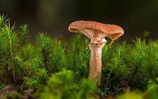 Pilz unter grünen Pflanzen