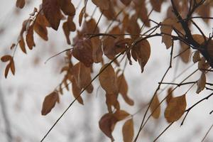 Blätter in der Herbstsaison