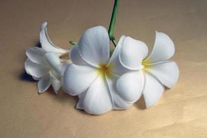 Leelawadee Blume