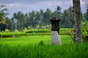 Alter für familieneigenes Reisfeld