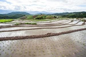 Reisfelder auf Terrassen. foto