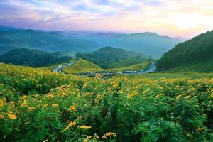 Straße im Sonnenblumenfeld bei Mae Hong Son Provinz, Thailand foto