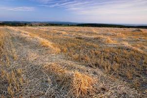 geerntetes Weizenfeld mit Heu