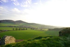 grünes Feld in Irland