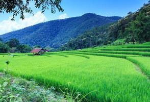 Landschaft des gesäumten grünen terrassierten Reisfeldes
