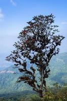 Baum bei Kew Mae Pan, Thailand
