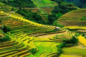 Reisfelder auf Terrassen von Mu Cang Chai, Vietnam. foto