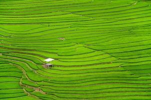 grüne terrassenförmig angelegte Reisfelder Landwirtschaft in Sapa Vietnam foto