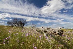 Algarve Landschaftshügel mit gelben Büschen foto
