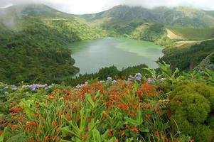 Blumen auf dem Vulkan