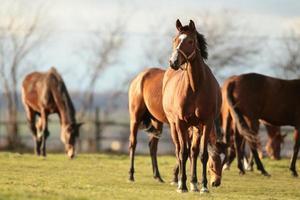 Pferd auf einer Weide