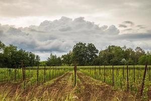 Sturm auf den Feldern Italiens